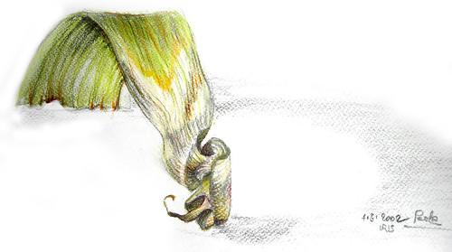 foglia d'iris