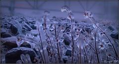 Ice 1 (Johnny V.) Tags: potofgold