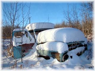 Snow Blanketed Treasure......