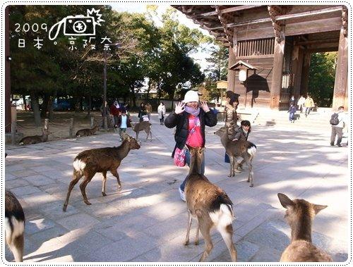 奈良的鹿 (7)