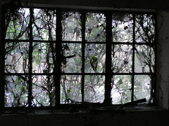 Over grown window (Ashley Basil) Tags: door new trees snow ice glass forest work woods steps pump greenhouse ferns glasshouse boiler hartstongue coldframe