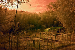 Bamboo Forest And Vegetable Garden (aeschylus18917) Tags: trees red sky tree japan forest garden landscape ir woods nikon scenery d70 nikond70 farm surreal bamboo infrared take  agriculture nikkor infra 1870mm f3545g  1870  1870f3545g   nikkor1870f3545g danielruyle aeschylus18917 danruyle druyle   1870mmf3545gifdx mountdake nikkor1870f3545gdx