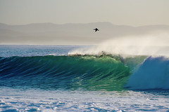 glass (laatideon) Tags: sea bird dawn surf waves cormorant glassy jeffreysbay etcetc laatideon deonlategan