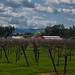 Thomas Kruse Winery