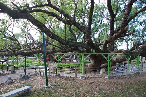 The Giant Tree