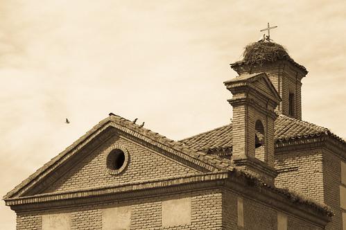 Pájaros y tejados