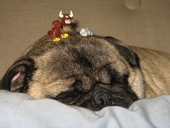 LEGO animals on my pug