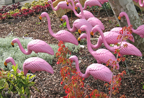 pink flamingo group