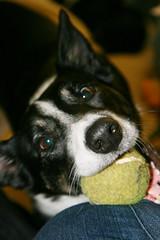 i has ball, life is good