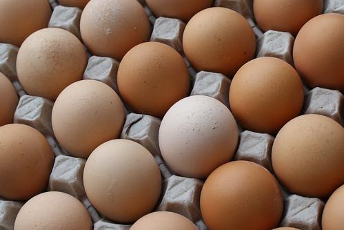 Come leggere le etichette delle uova