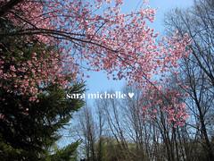 A burst of spring!
