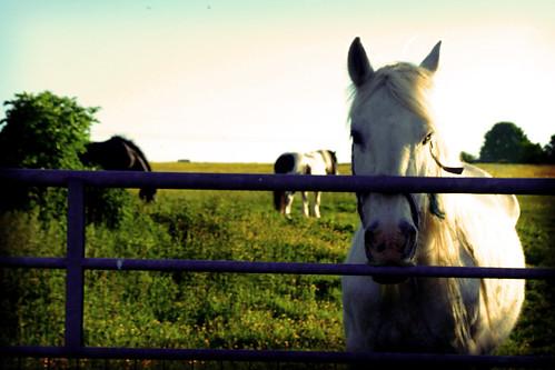 Just a Little Horse