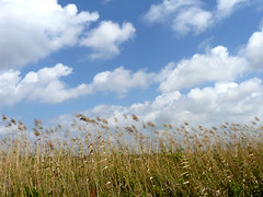 Grass & Clouds (Oh Kaye) Tags: clouds wildliferefuge louisana flickrsbest the4elements