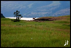 Tom McCall 005 (jaythom256) Tags: sunset oregon outdoors hiking trail columbiariver gorge lupine columbiarivergorge balsamroot tommccall rowenacrest tommccallpreserve