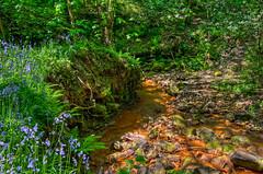 Ecclesall Woods_220510_0145