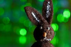 Bokeh rabbit (amel63) Tags: rabbit green nikon bokeh 60mm blitz tamron metz hschen fash d90 farbfilter