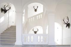 Ausstellungsansicht Jagdmuseum Schloss Stainz