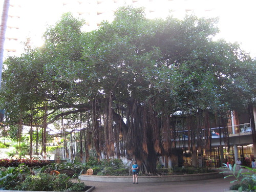 A neat banyan tree near the hotel.