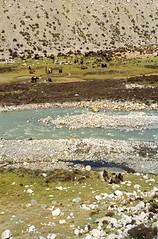 Nomads to Rongbuk (reurinkjan) Tags: 2002 nikon tibet everest nomads rongbuk tingri jomolangma drokba janreurink brogpa rongphuchu rongchu བོད། བོད་ལྗོངས།