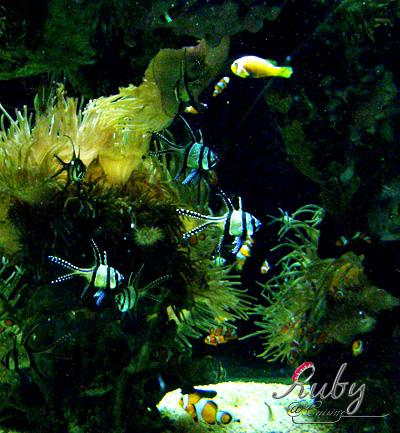 Monaco_aquarium_fish_02