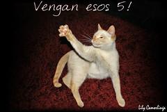 P a n t e r a (Liliana Rivera Camorlinga) Tags: animal cat sony gato felino alpha mascota pantera hija gimmefive garras lilycamorlinga