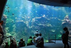 Academy Of Sciences (Jay Pasion) Tags: sanfrancisco california goldengatepark park light fish water aquarium dinosaur diver waterworld academyofsciences jaypasion