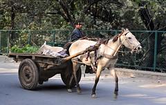 India New Delhi _D7C2047 (youngrobv) Tags: people india geotagged asian person nikon asia asians locals indian indians local gps fx notc n1 bharat newdelhi uttarpradesh 70200mmf28gvr  0812 robale hindustan d700   youngrobv solmeta  d7c2047