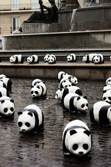 Pandas on fountain