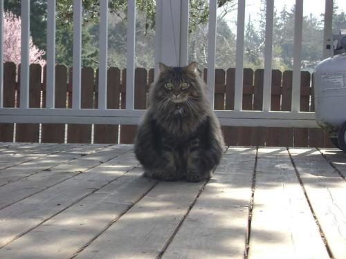 Corky cat