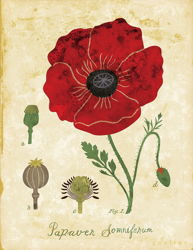 Poppy Botanical