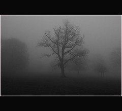 Macabre Tree - Shrouded in Mist - Dundee - Tayside (Magdalen Green Photography) Tags: trees blackandwhite bw tree fog scotland cool dundee scottish tayside haar camperdownpark mistytree dsc4340 shroudedinmist mistyview creepyforest iaingordon macabretree