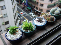 succulents and cacti (Chrischang) Tags: plant home windowsill minigarden 2ez myplant mycactus home500 windowsill500 mysucculent mysucculentsandcacti