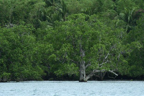 Inampulugan mangroves