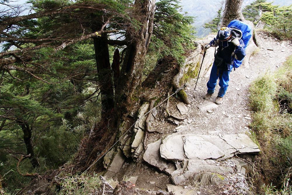 奇萊Day3-70 超陡森林小徑