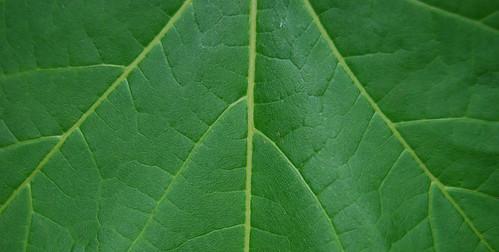 Leaf Texture 10