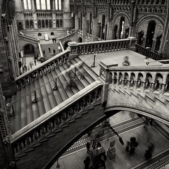 Asymmetric Congruent Polygons I (Silver Doctor) Tags: people motion blur london history museum stairs natural south staircase kensington escher mcescher mywinners absoluteblackandwhite monochromaticvisions silverexpressionsphotography