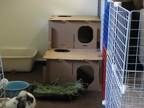 new bunny fort