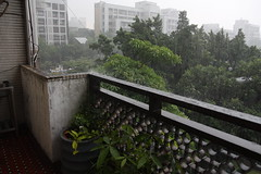 居然下雨了 (skykid0428) Tags: 建國花市 換盆 090627