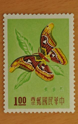 蛇頭蛾(Attacus atlas ryukyuensis, ヨナグニサン)