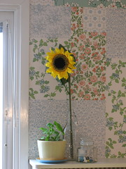 Sunflower: .eee, I want the sun!!! (lyckeliv) Tags: wallpaper yellow spring bottle colorful bright sweden country sunny pot sunflower jar feeling wallpapers patchwork oldfashioned pelargonium galss rrstrand mrbacka