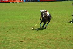 Torneo Polo Barcelona 2010 (gemicr69) Tags: barcelona espaa horse caballo spain sony catalonia tournament catalunya alpha polo barcellona catalua 2010 torneo cavall espanya a300 torneig polotournament dslra300 oltusfotos mygearandme torneodepolo torneigdepolo joangarciaferre gemicr gemicr69