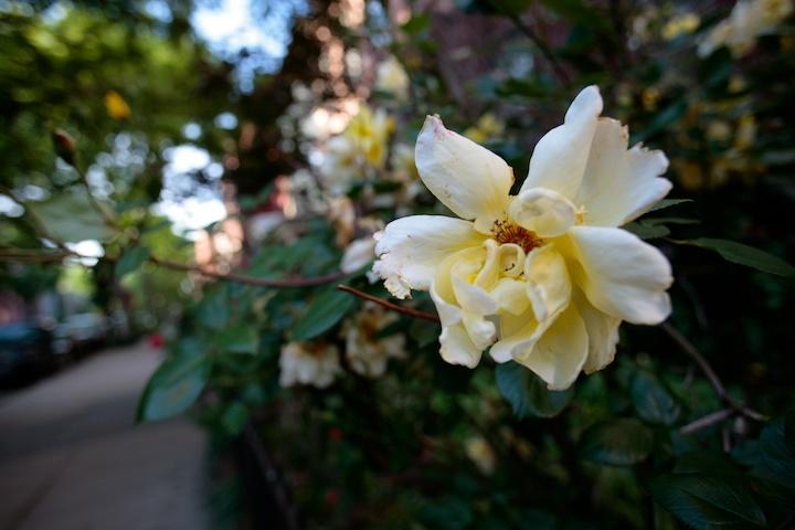 4613058962 82f573417f o a flower