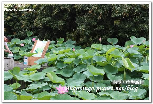 中興新村99年蓮花I2235