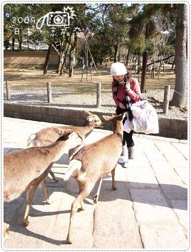 奈良的鹿 (9)