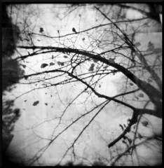 [mistakes and damages] (Valentina Calosci) Tags: winter blackandwhite bw tree 6x6 film leaves foglie alberi analog square holga lomo explore squareformat inverno grosseto 120mm valentina mistakes bonjourtristesse damages balmorhea ilford400 firsttrial holgamonamour primoesperimento autumninside