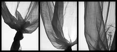 Trittico // Triptych (Raffaello Lamonaca) Tags: bw raw triptych veil knot bn transparency curtains layers bianco nero velo tenda controluce grezzo trittico nodo trasparenza livelli canonpowershots3is