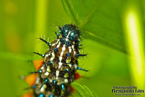 butterflyfarm01_01