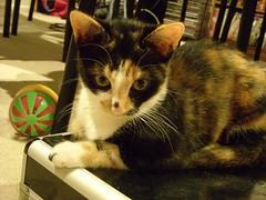 jinx (kukita) Tags: max kittens jinx