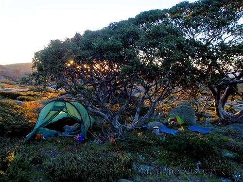 Snowgum camp (c)