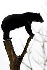 [フリー画像] [動物写真] [哺乳類] [熊/クマ]        [フリー素材]
